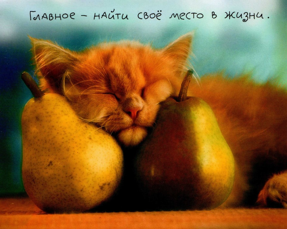 http://cing.ucoz.ru/_fr/0/1506065.jpg